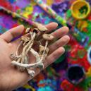 Les Champignos Magiques Peuvent-ils Améliorer La Créativité ?