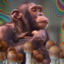 Qu'est-ce que la théorie du singe enivré et pourquoi est-elle capitale ?