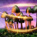 Comment les champignons magiques sont-ils devenus magiques?