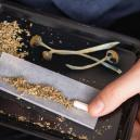 Que se passe-t-il si on fume des champignons magiques ?